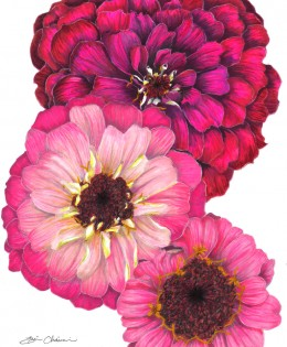 3 Zinnias for Zinnia
