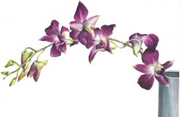 """Orchids"" for John"