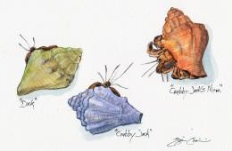 3 Hermit Crabs